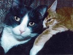 pic-kitty